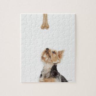 Dog looking up at bone jigsaw puzzle
