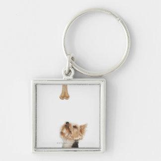 Dog looking up at bone key ring