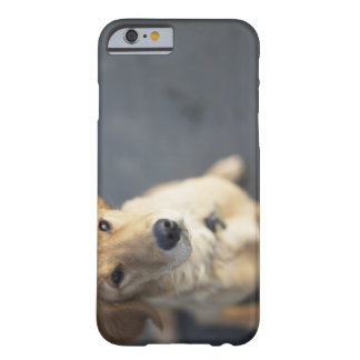 Dog looking up, close-up barely there iPhone 6 case