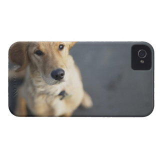 Dog looking up, close-up iPhone 4 case