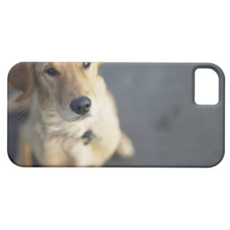 Dog looking up, close-up iPhone 5 cover