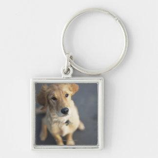 Dog looking up, close-up key ring