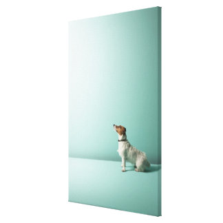 dog looking up into space canvas print