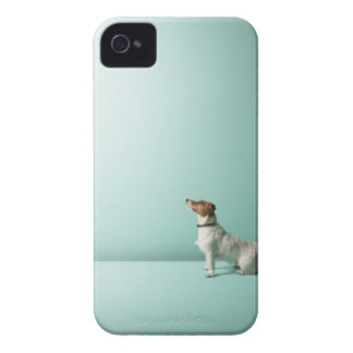 dog looking up into space iPhone 4 covers