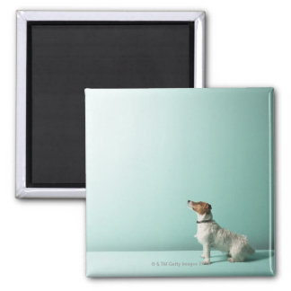 dog looking up into space square magnet