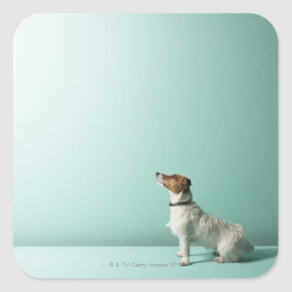 dog looking up into space square sticker