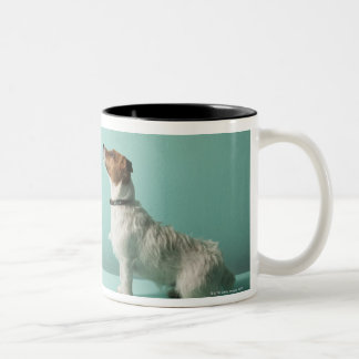 dog looking up into space Two-Tone coffee mug