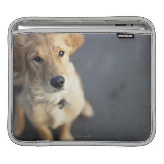 Dog looking up iPad sleeve