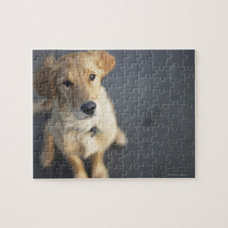 Dog looking up jigsaw puzzle
