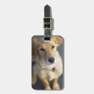 Dog looking up luggage tag