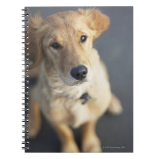Dog looking up notebooks