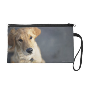 Dog looking up wristlet