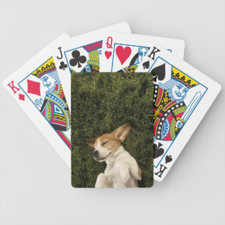 Dog Lying in Grass Sleeping Bicycle Playing Cards