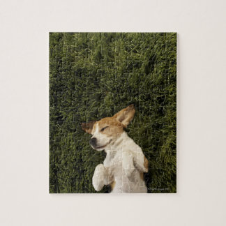 Dog Lying in Grass Sleeping Jigsaw Puzzle