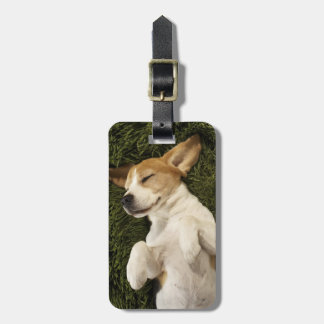 Dog Lying in Grass Sleeping Luggage Tag