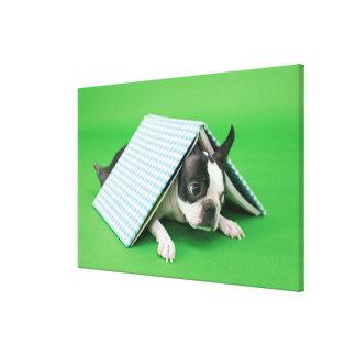Dog lying under book canvas print