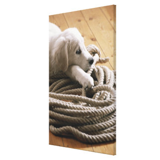Dog lying with rope on wooden floor, elevated canvas print