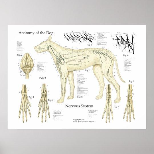 Dog Nervous System Anatomy Poster Chart Dog Nervous System Anatomy