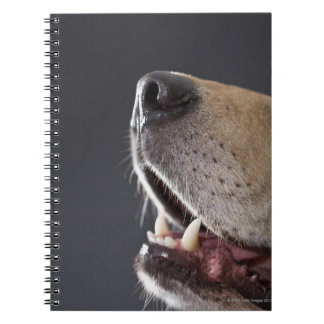 Dog nose and mouth, close-up notebook