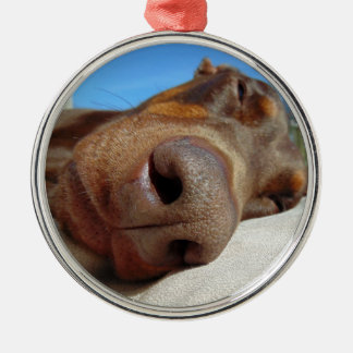 Dog nose Silver-Colored round decoration