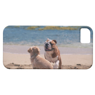 Dog of Sandy Beach Case For The iPhone 5