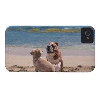 Dog of Sandy Beach iPhone 4 Case