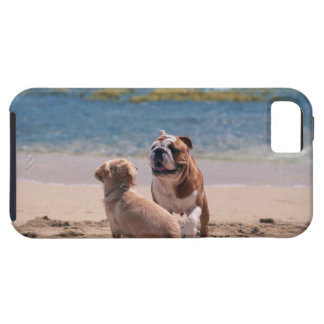 Dog of Sandy Beach iPhone 5 Cases