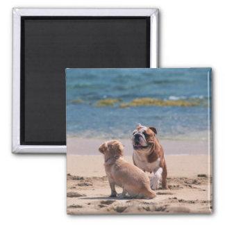 Dog of Sandy Beach Magnet
