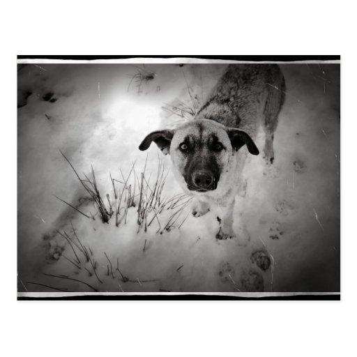 Dog old photo post card
