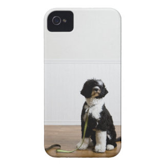 dog on a leash Case-Mate iPhone 4 case