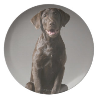 dog on a pedestal plate