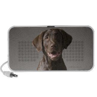 dog on a pedestal travelling speakers