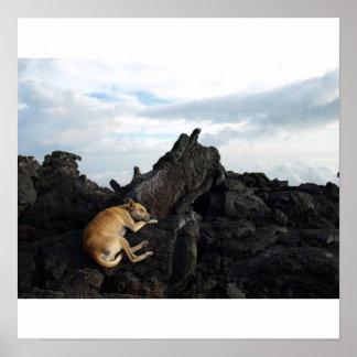 Dog on a Volcano Print