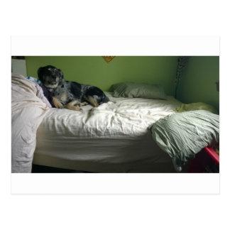 Dog on bed postcard