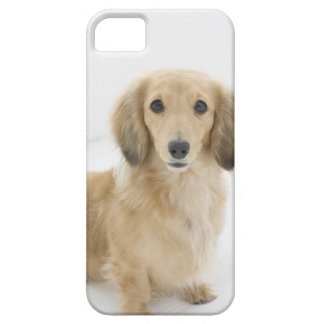 Dog on couch barely there iPhone 5 case