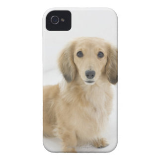 Dog on couch iPhone 4 cover