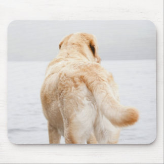 Dog on dock mouse pad