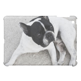 Dog on gravel iPad mini cases