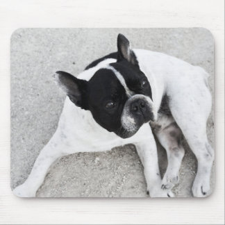 Dog on gravel mouse pad