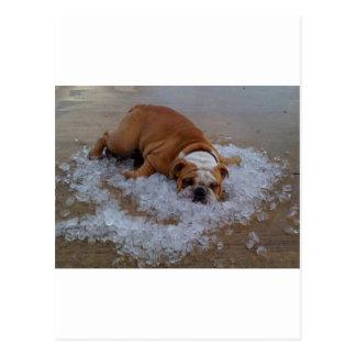 dog on ice Dam I m Hot Postcards