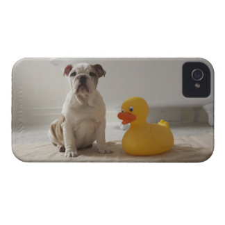 Dog on mat with plastic duck Case-Mate iPhone 4 cases
