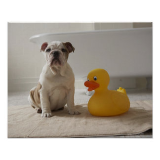 Dog on mat with plastic duck poster