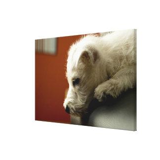 Dog on office chair canvas print