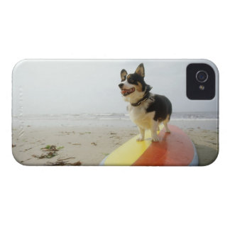 Dog on surfboard Case-Mate iPhone 4 case