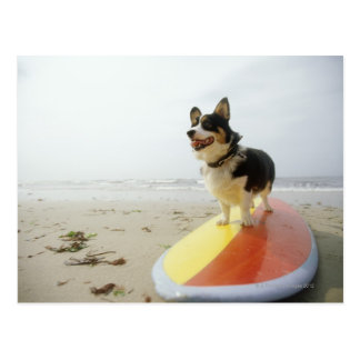 Dog on surfboard postcard