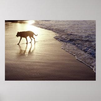 Dog on the beach at sunset print