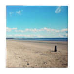 Dog On The Beach Tiles
