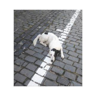Dog On The Line Canvas Print