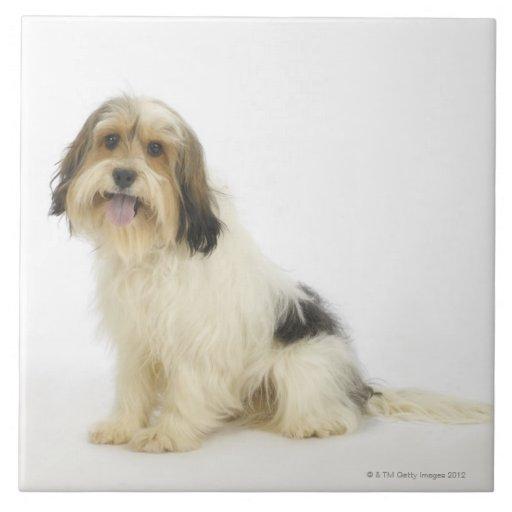 Dog on White 104 Large Square Tile