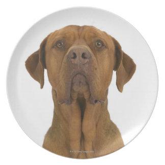 Dog on White 38 Dinner Plate
